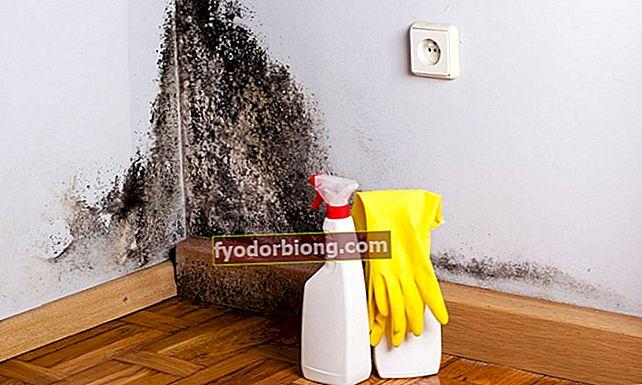 Πώς να σταματήσετε το καλούπι από τους τοίχους με ένα σπιτικό διάλυμα