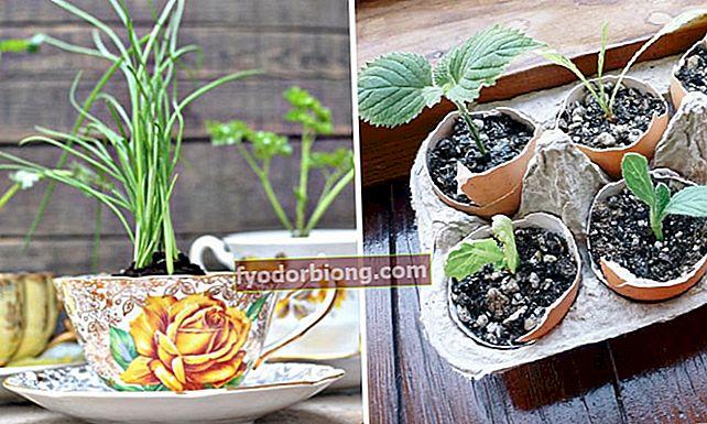 7 käytännön ideaa pienen kasvipuutarhan perustamiseen kotona
