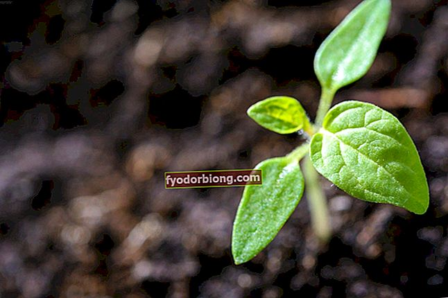 Planter, der er lette at vedligeholde - 20 praktiske arter at dyrke derhjemme