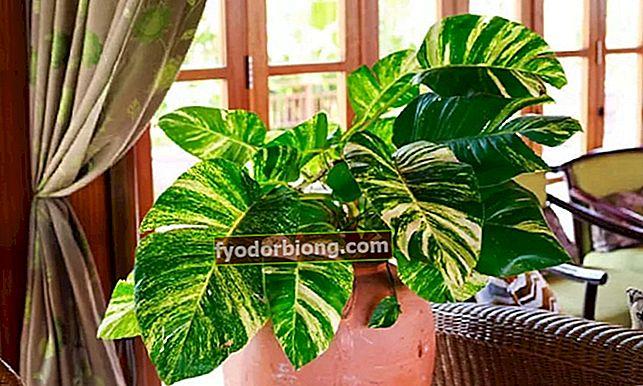 10 φυτά που δεν χρειάζονται πολλή φροντίδα στο σπίτι