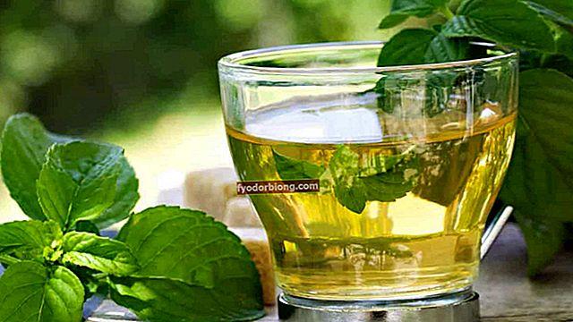 Blåbær te - Hvad det er, fordele, egenskaber og kontraindikationer