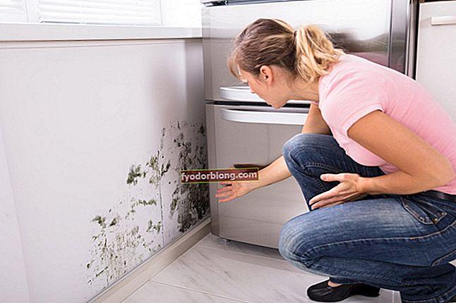 Vůně plísní - původ, čištění a recepty k odstranění problému