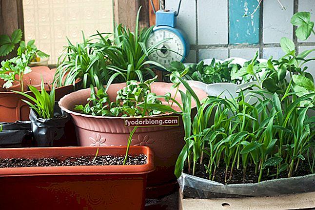 Hjemhave - Tips til, hvordan man planter og dyrker grøntsager derhjemme