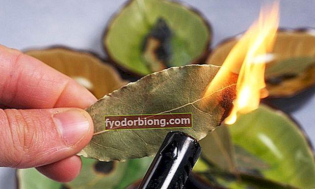 Proto byste měli doma spálit bobkový list