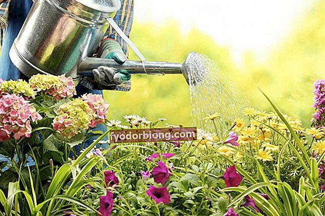 Vanding planter - hvordan man gør, hyppighed, tidspunkter og hvilke der ikke har brug for