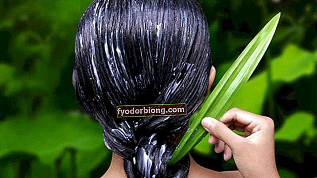 Aloe Vera i hår - For hvad det tjener, fordele og hvordan man gør det